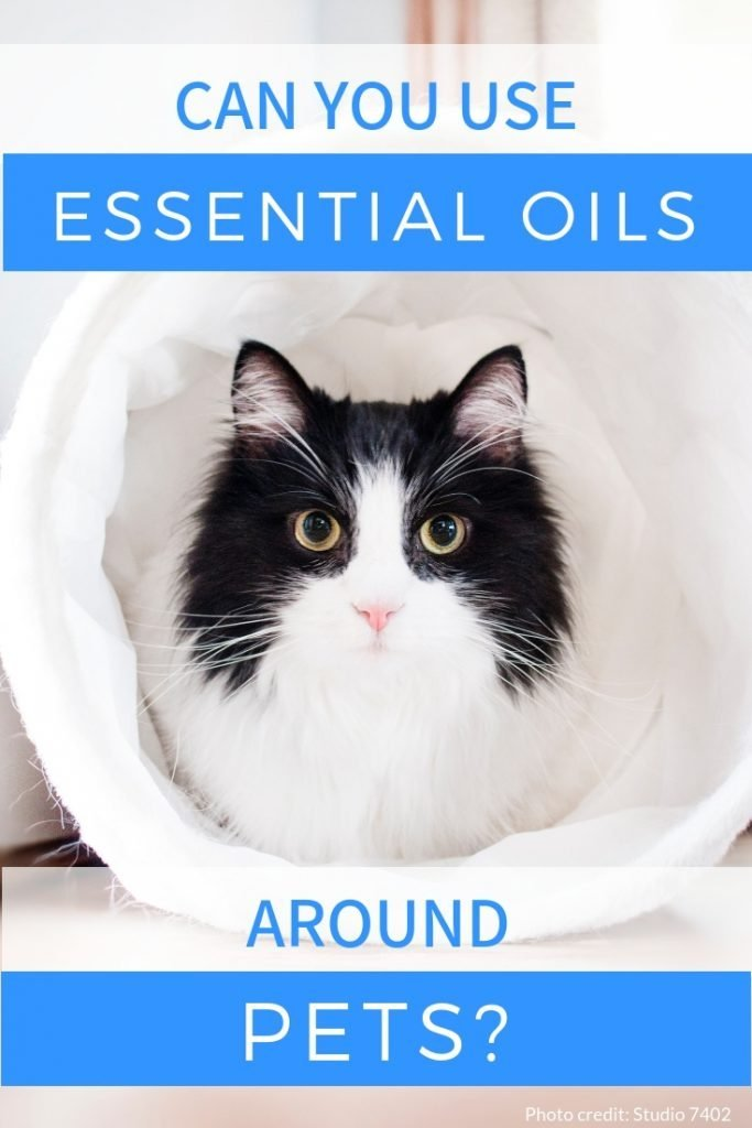 Essential Oils are great in a diffuser, but keep it safe for your furry friends! This is the ultimate guide to using essential oils around pets from The Makeup Dummy #essentialoils