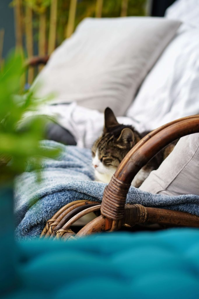 How To make your apartment balcony or small patio a safe place for your cats to enjoy some outdoor time and sunshine.
