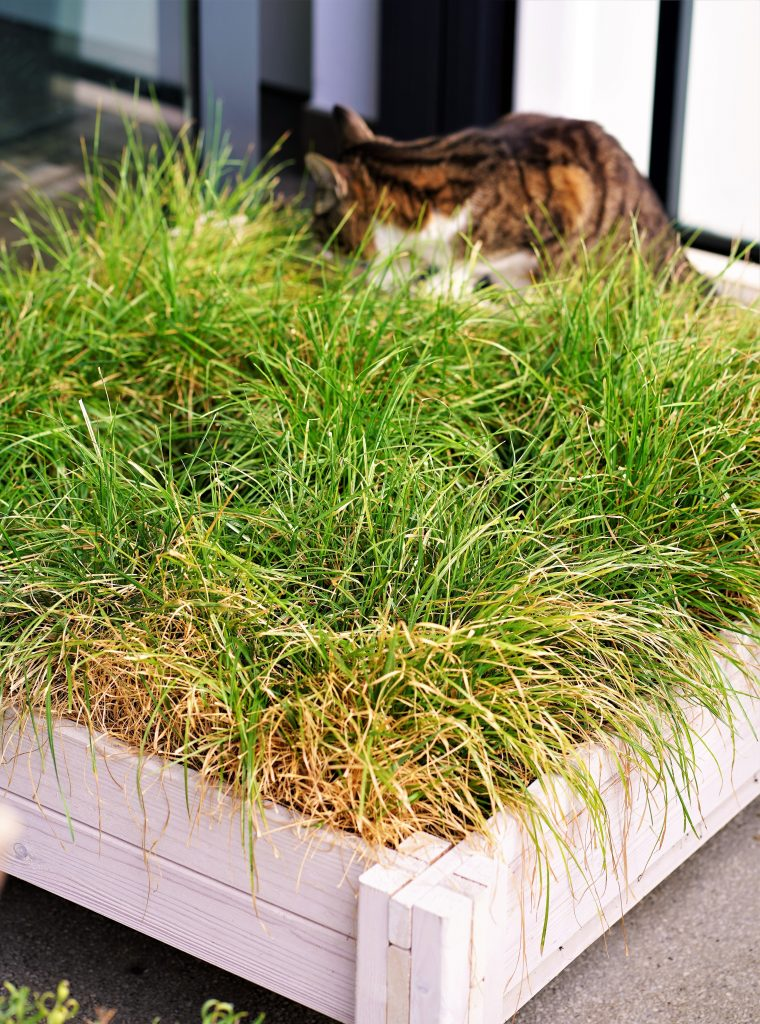 Create a fun outdoor space for your pet. Your cat will love its personal grass bed, made from a raised garden bed. All you need is potting soil and grass seeds to start growing your own cat grass bed. Your cat will love to nibble from the grass and at the same time lounge in the sun.