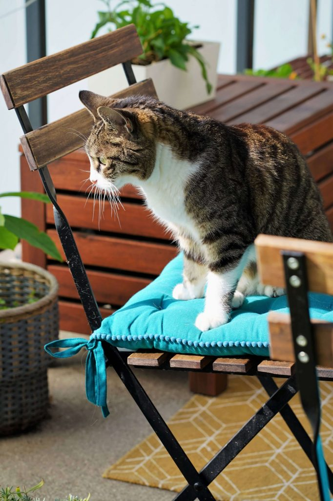 How To turn your outdoor space into a Cat-Proof Balcony